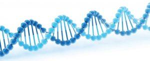 Is Premature Ejaculation Genetic